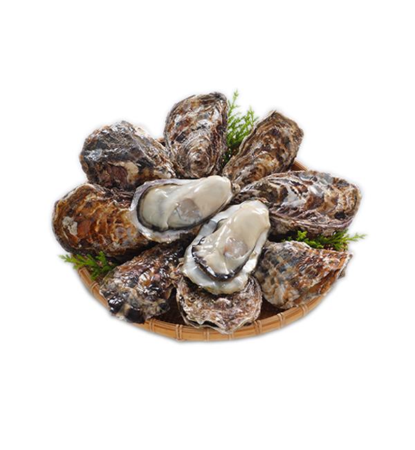 KUNIHIRO 日本生食牡蠣(帶殼) M SIZE 1050g/包(12顆)